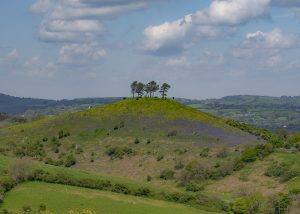 Bluebells on the hill